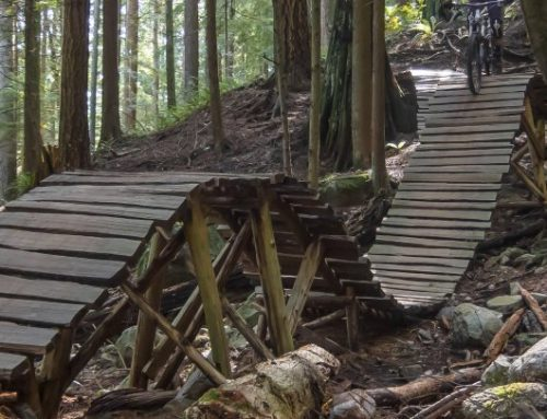Mountain Biking–beginner to advanced trails.